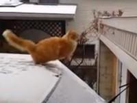 Katze will von Auto auf Hausdach springen