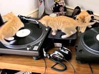 Katzen als DJs