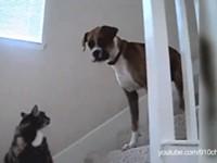 Katzen als Türsteher - Compilation