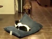 Katzen klauen Hunden das Bettchen - Compilation