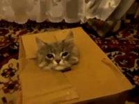 Katzen lieben Pappkartons