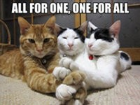 Katzen Picdump #7