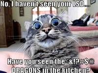 Katzen Picdump #9