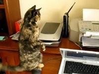 Katzen und Drucker - Compilation