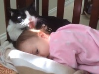 Katzenwäsche am Morgen