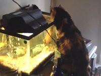 Killerfisch vs. Katze