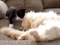 Kleine Babykatze ärgert Mutterkatze