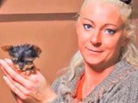 Kleinster Hund der Welt