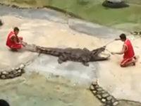 Krokodil-Zahnärzte leben gefährllich
