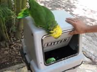 Lachende Papageiem im Briefkasten