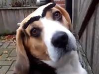 Lustige Hunde mit Augenbrauen - Compilation