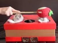 Lustiges Katzen-Spiel