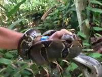 Mann rettet Katze vor Würgeschlange