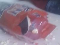 Meerschweinchen dreht in Popcorn-Tüte durch