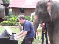 Mit Elefant im Duett Klavier spielen