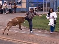 Schaf Attacke
