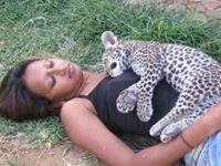 Schlafendes Leopardenbaby