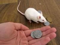 Schlaue Mäuse
