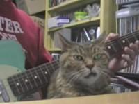 Seltsame Katze