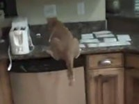 So bekommt man eine Katzen vom Küchentresen