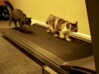 Sportliche Katzen auf dem Laufband