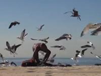 Streich: Möwen am Strand anlocken