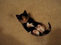 Süßeste Katze der Welt