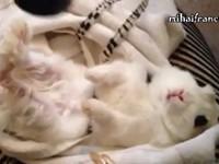 Tiere lieben Haarföhns - Compilation