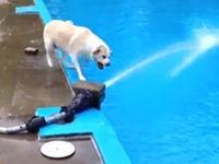 Tollpatschige Hunde – Compilation