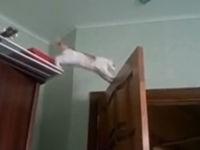 Tollpatschige Katzen - Compilation