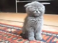 Total müde Katze