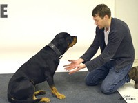 Zauberer lässt Hundefutter verschwinden