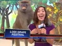 Zudringlicher Affe beim Interview
